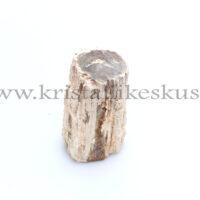 Kivistunud Puit, toorkivi